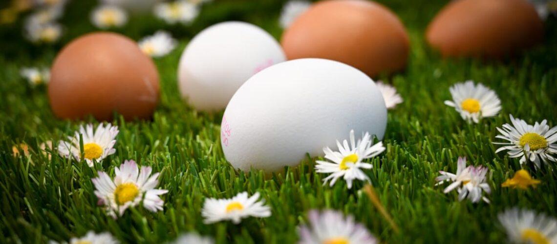 Il Quinto Quarto Azienda Roberti uova uovo foto Marioli-5